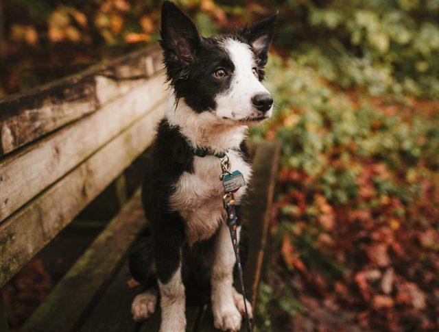 Comment retrouver mon chien perdu ?